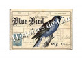 Coupon  Blue Bird