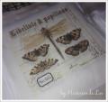 Coupon  Libellule et papillons